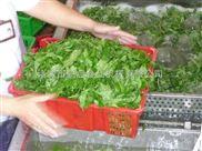 全自动连续小规模蔬菜清洗机